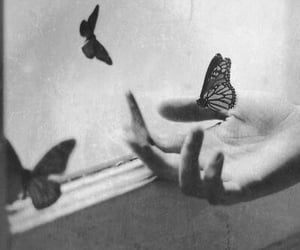 air, freedom, and butterflies image