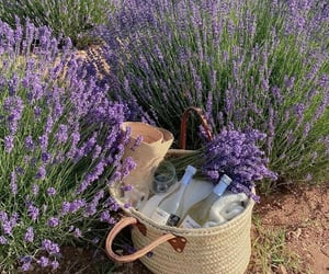 picnic, flowers, and lavender image