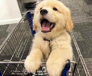 animal, labrador, and shopping cart image