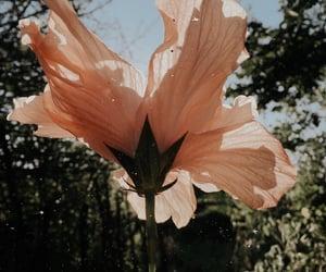 Flowers morning