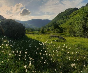 calm, green, and meadow image