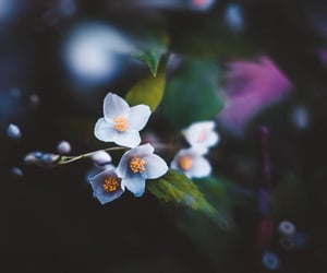 beautiful, garden, and beauty image