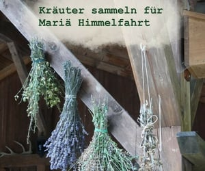 Catholic, tradition, and lavender image