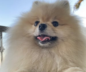 animal, mignon, and joyeux image