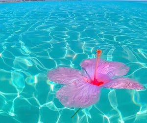 blue, photography, and pink image
