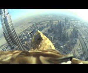 freedom, video, and burj khalifa image
