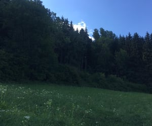 adventure, forest, and meadow image