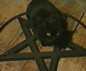 cat, pentagram, and black image