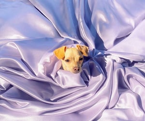 dogs, fabric, and lilac image