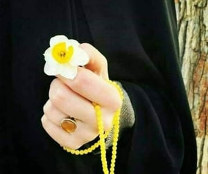 flower, yellow, and flowers image