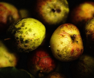 apples and color image