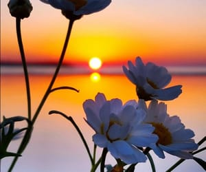 beautiful, backgrounds, and daisies image
