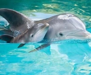 Beautiful Dolphins Swimming