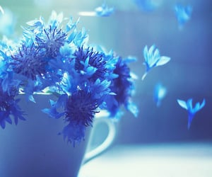 blue, romantic, and whimsical image
