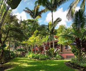 garden, hawaii, and home image