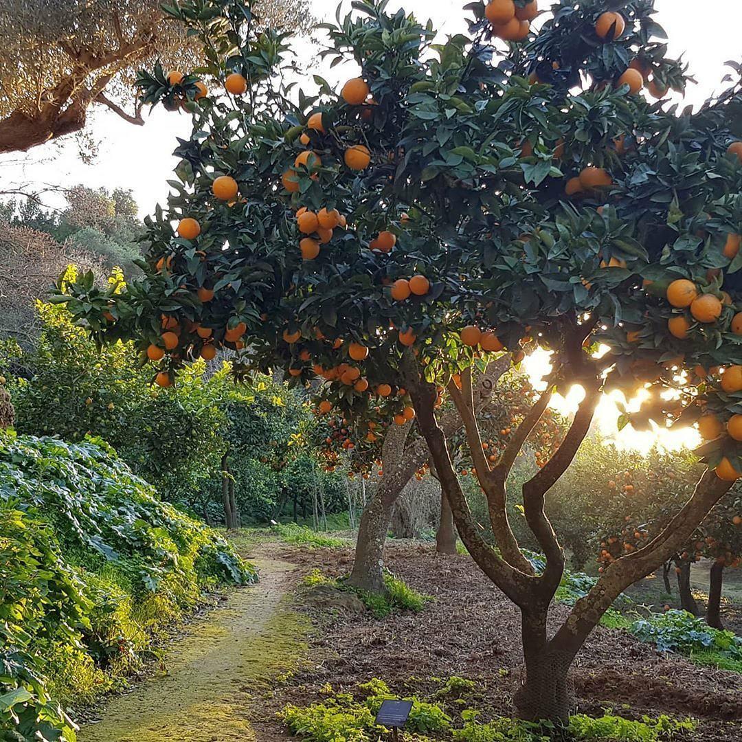 nature, orange, and tree image