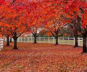 autumn, fence, and landscape image