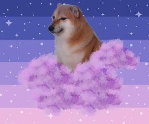 dog, pic, and doge image