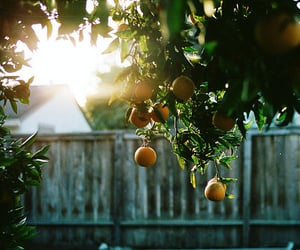 garden, orange tree, and photography image