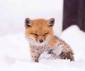 beautiful, fox, and snow image