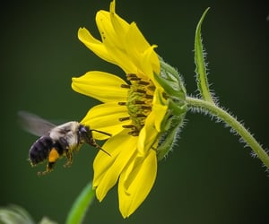 bee, photographers on tumblr, and bumble bees image