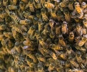 bees, photographers on tumblr, and woodsong hollow farm image