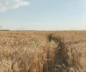 aesthetic, nature, and wheat field image
