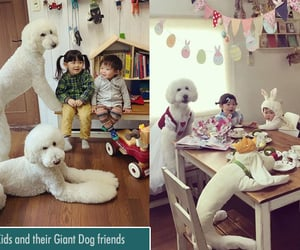 funny dogs, funny kids, and funny image