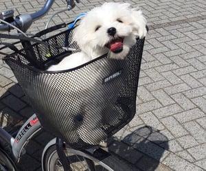 animal, bicycle, and black image