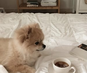 dog, aesthetic, and animal image