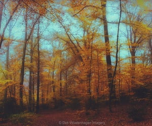 autumn, original photographers, and colours image
