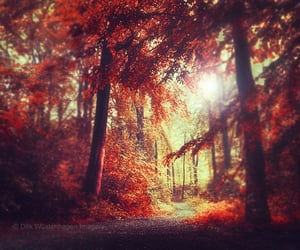 forest, magical, and nature image