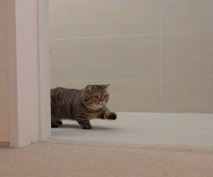 Cat lulu❤️