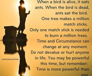 ants, birds, and time image