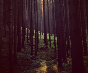dark, forest, and light image