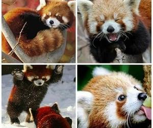 Animais, filhote, and fofo image