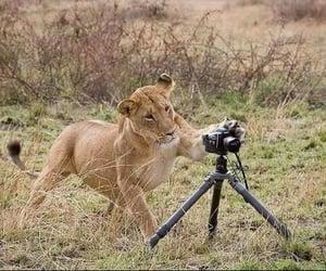 Animais, camera, and natureza image