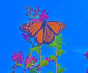 indie and butterfly image