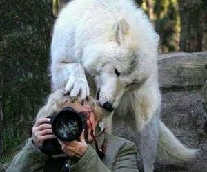 Animais, fotografia, and lindo image