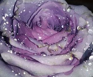 dew, droplets, and flores image