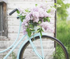 aesthetic, garden, and bicycle image