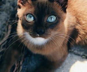 true love, kitty cat, sweet and beautiful