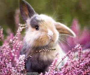 animals, bunny ears, and meadow image