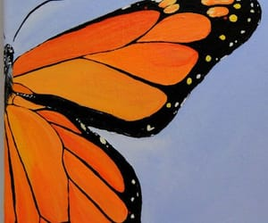 butterflies, butterfly, and monarch image