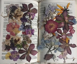 book, colorful, and flowers image