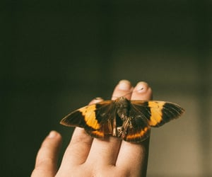 50mm, analog, and insect image