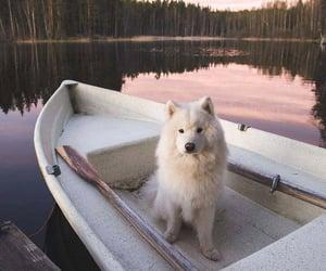 lake, pet, and boat image