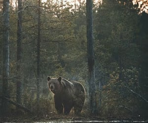 bear, river, and forest image