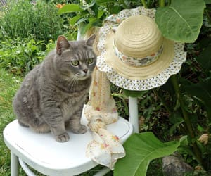 cat, garden, and cottagecore image
