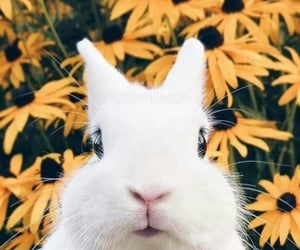 animal, blossom, and white image
